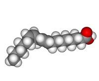 Función de los lípidos